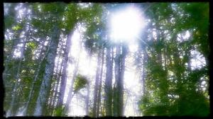 greentrees_2