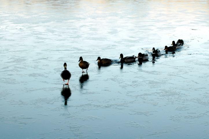 ducks-in-a-row-1316756-1279x850