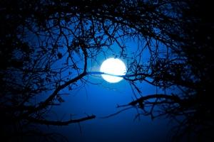 stockvault-forest-sunrise---midnight-blue152525
